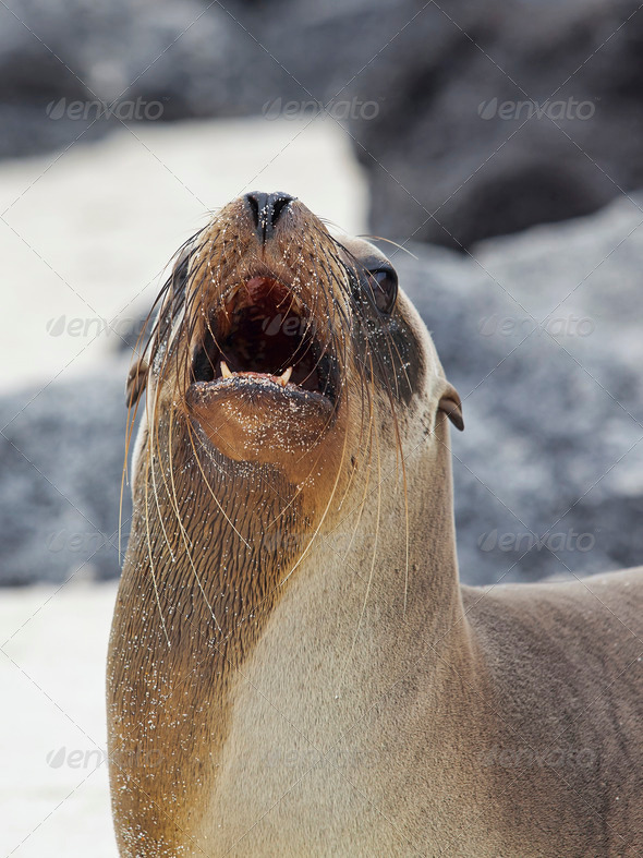 Sea lion colony - Stock Photo - Images