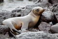 Sea lion colony - PhotoDune Item for Sale