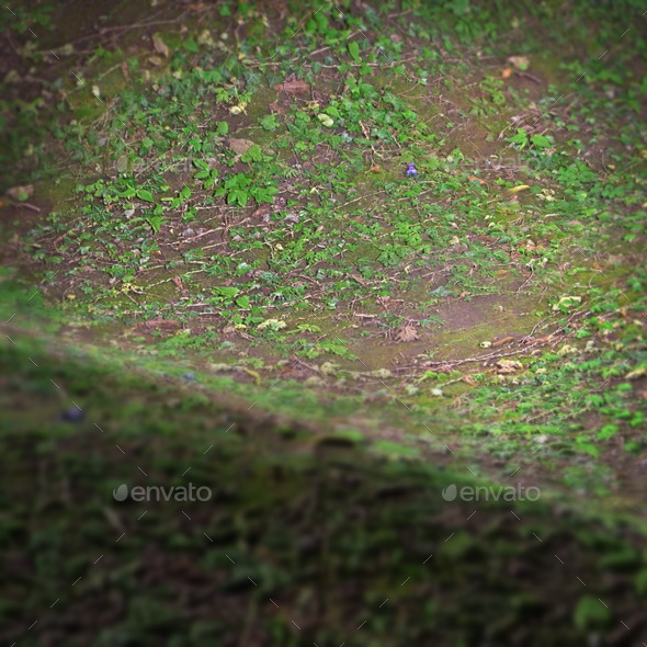 Jungle Ground Seamless Texture By Lucky Fingers 3docean