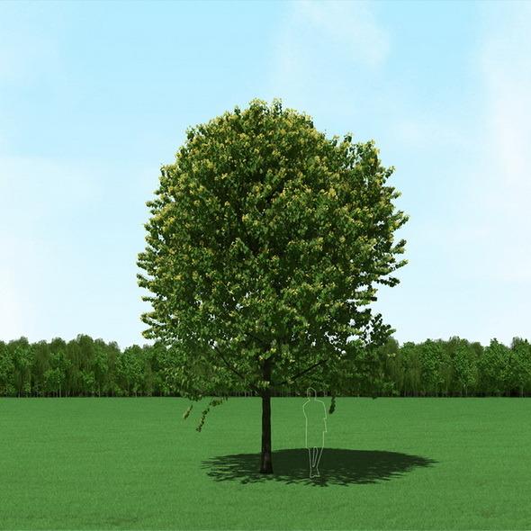 Blooming Tilia (Linden) Free Tree 3d Model - 3DOcean Item for Sale