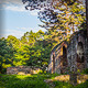 Ruins in the Forest with Beautiful Light - VideoHive Item for Sale