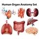 Anatomy - GraphicRiver Item for Sale