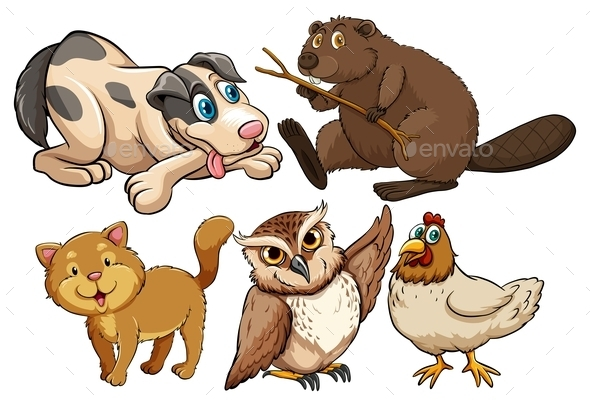 Animal - Animals Characters