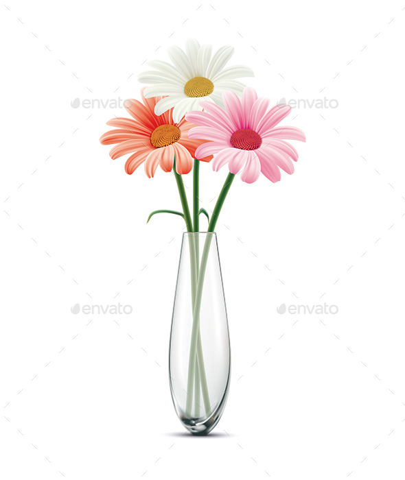 Daisy in a Glass Vase - Flowers & Plants Nature