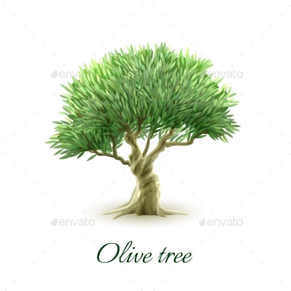 Single Olive Tree Picture Print - Flowers & Plants Nature