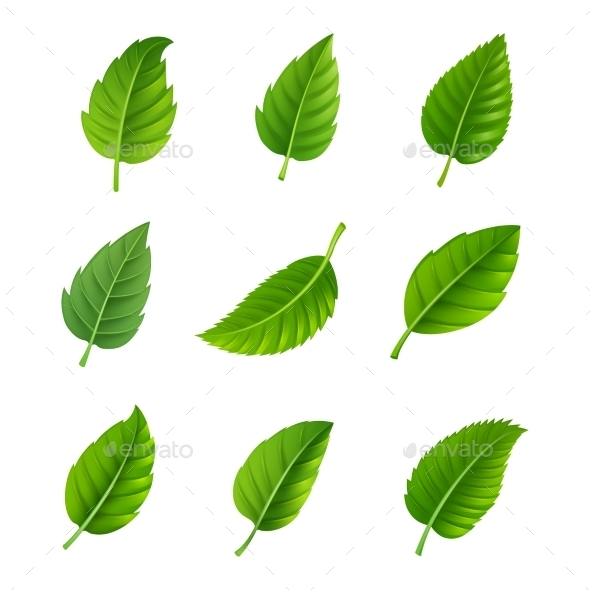 Green Leaves Decorative Set - Organic Objects Objects