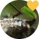 Ants at Work - VideoHive Item for Sale