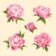 Peonies - GraphicRiver Item for Sale