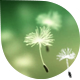 Fly Dandelions 1 - VideoHive Item for Sale