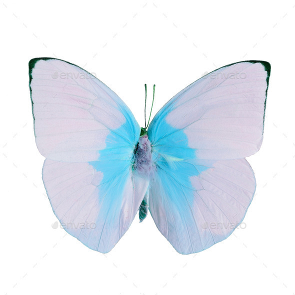 fancy butterfly isolated on white - Stock Photo - Images