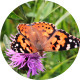 Butterfly on Pink Flower - VideoHive Item for Sale