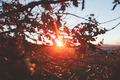 Sunshine Thgrough Tree - PhotoDune Item for Sale