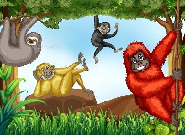 Monkeys - Animals Characters
