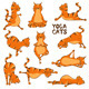 Funny Red Cat Doing Yoga Position. - GraphicRiver Item for Sale