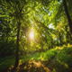 Sun Through the Leaves - VideoHive Item for Sale