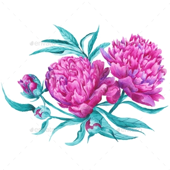 Pink Peony Botanical Illustration - Miscellaneous Illustrations