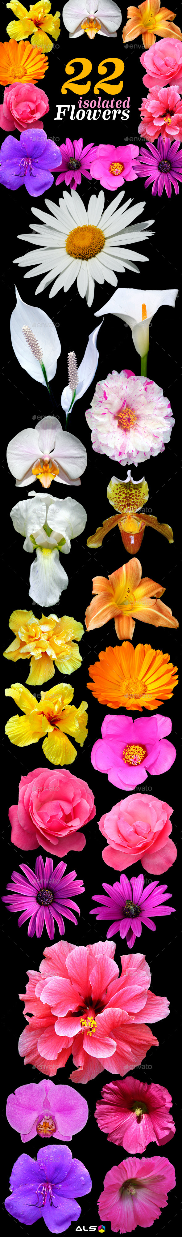 22 Isolated Flowers - Nature & Animals Isolated Objects