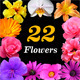 22 Isolated Flowers - GraphicRiver Item for Sale