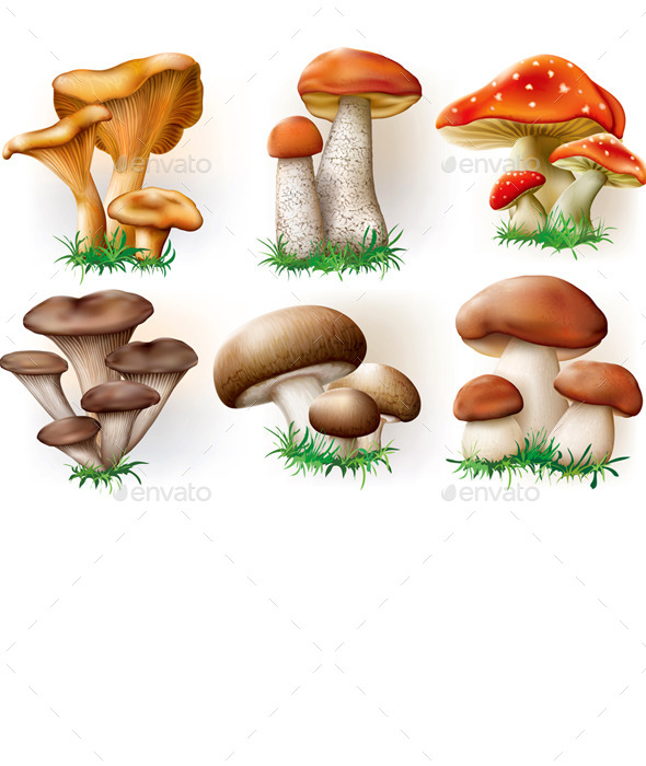 Mushrooms Collection - Organic Objects Objects