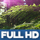 Wild Forest 2 - VideoHive Item for Sale