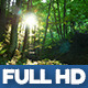 Wild Forest 1 - VideoHive Item for Sale