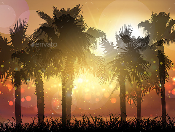 Palm Trees at Sunset - Landscapes Nature