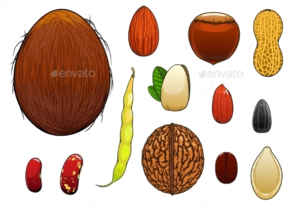 Realistic Nuts Seeds and Beans in Cartoon Style - Food Objects