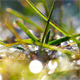 Green Grass And Dew Drops Frozen 2 - VideoHive Item for Sale
