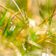 Drops Of Dew On A Green Grass 1 - VideoHive Item for Sale
