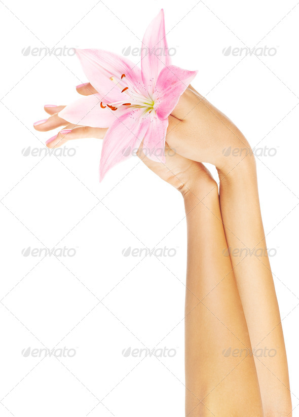 Fresh pink lily  in female hands - Stock Photo - Images