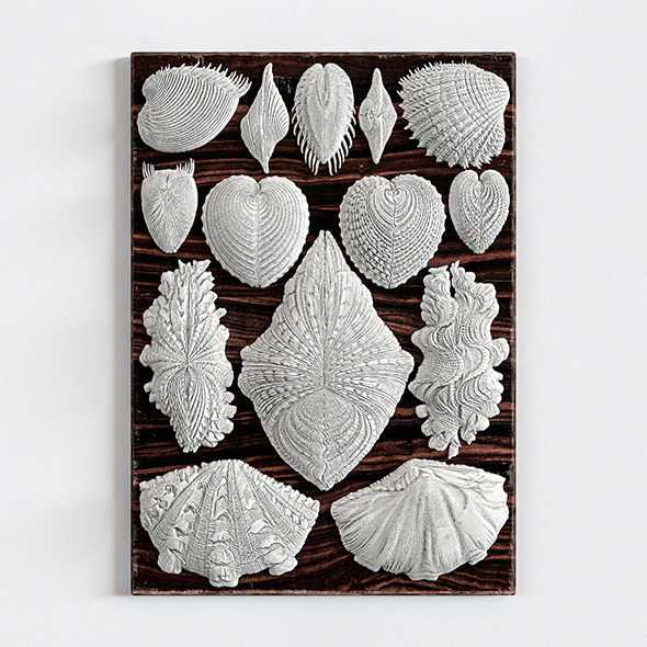 «Forms in Nature Wall Decor» - 3DOcean Item for Sale