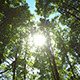 Sun Rays In The Forest 2 - VideoHive Item for Sale