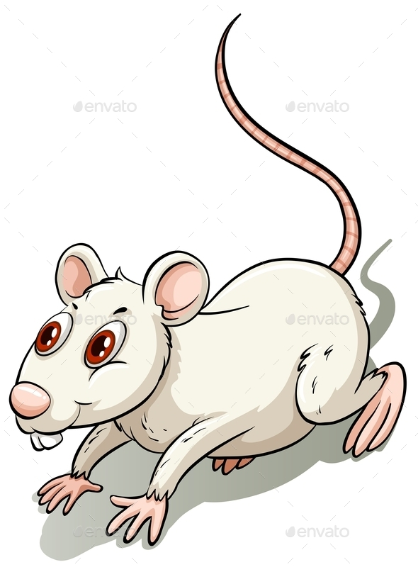 White Little Rat - Animals Characters
