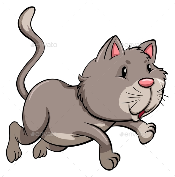 A Gray Cat - Animals Characters