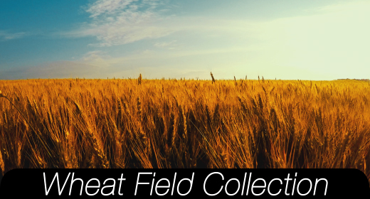 Wheat Field Collection