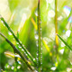 Drops Of Dew On A Green Grass 2 - VideoHive Item for Sale