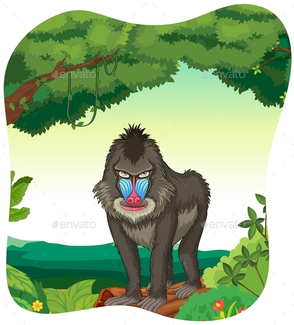 Baboon - Animals Characters