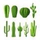 Cactus Realistic Set - GraphicRiver Item for Sale