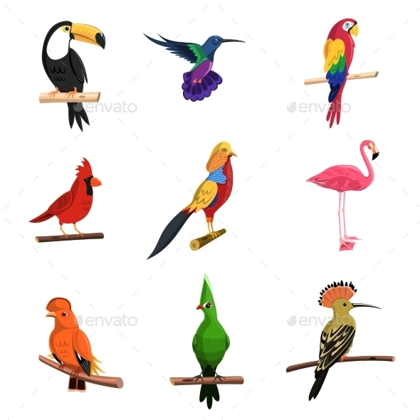 Exotic Birds Set - Animals Characters
