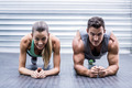 Portrait of a muscular couple doing planking exercises - PhotoDune Item for Sale