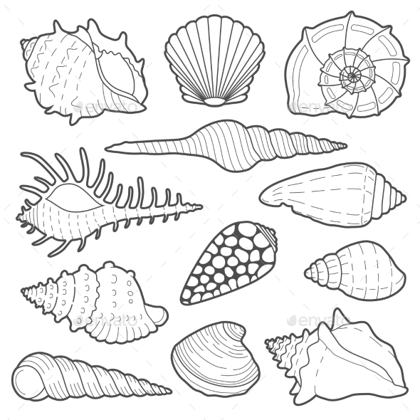 Sea Shells Vector Icon Set - Nature Conceptual