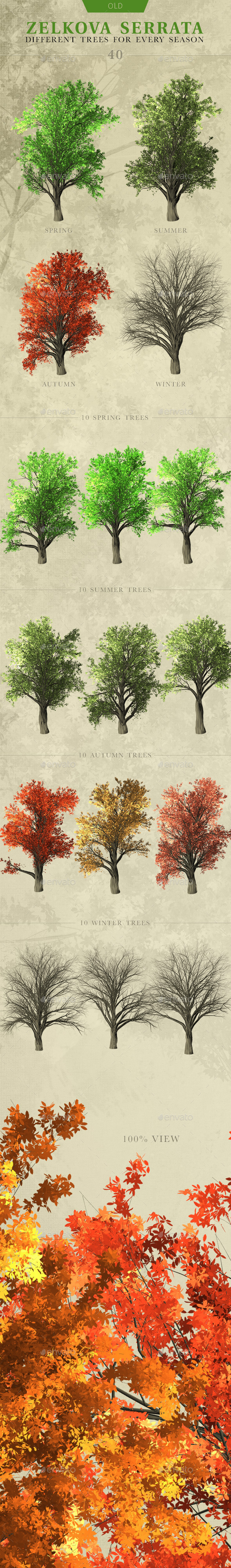 Zelkova Serrata Trees - Objects 3D Renders