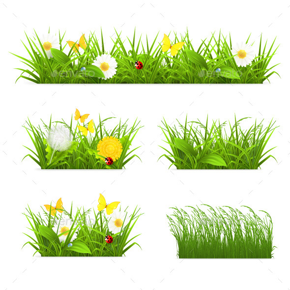 Green Grass with Flowers - Flowers & Plants Nature