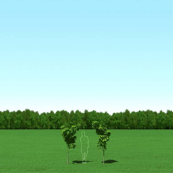 Blooming Chesstnut (Castanea) Trees 3d Models - 3DOcean Item for Sale