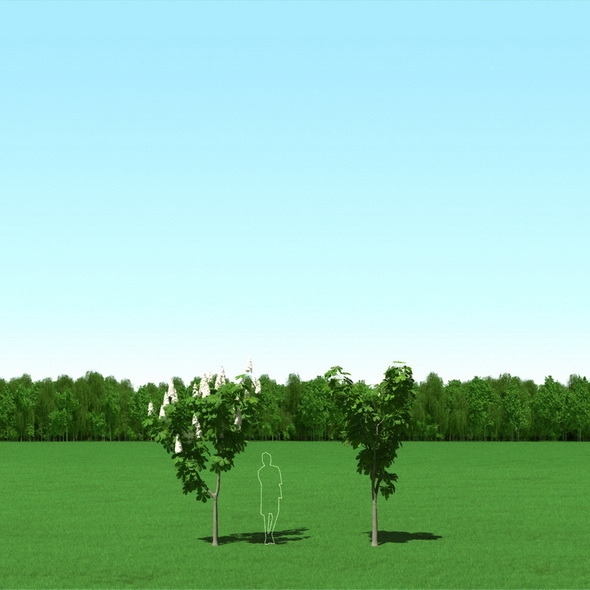 Blooming Chesstnut (Castanea) Free Trees 3d Models - 3DOcean Item for Sale