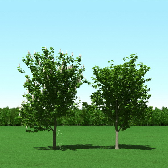 Blooming Chesstnut Trees (Castanea) 3d Models - 3DOcean Item for Sale