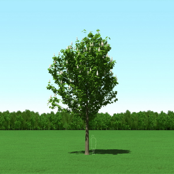 Blooming Chesstnut Tree (Castanea) 3d Model - 3DOcean Item for Sale
