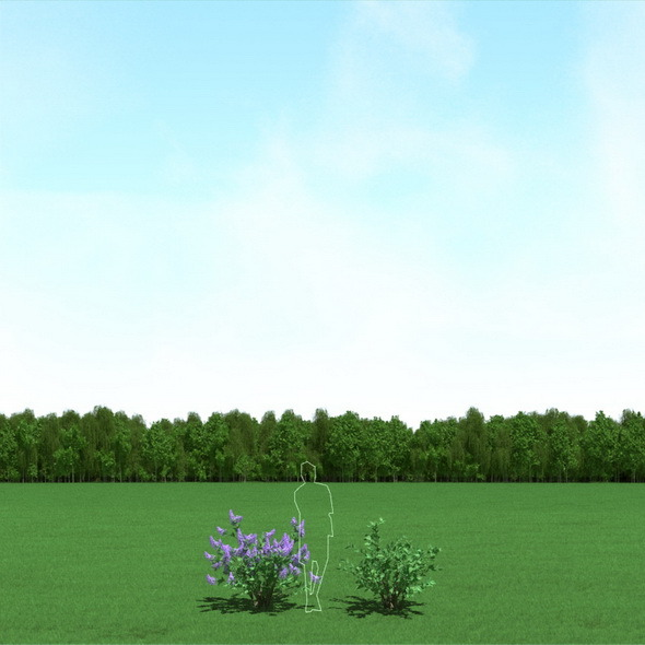 Blooming Syringa (Lilac)Trees 3d Models - 3DOcean Item for Sale