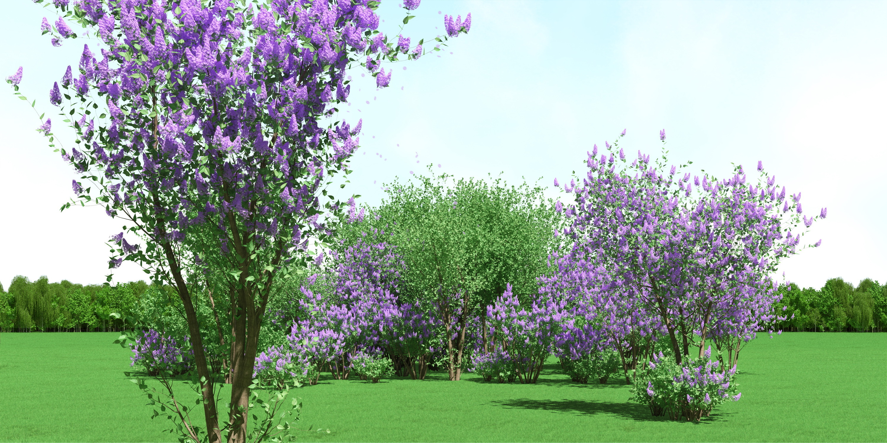 Blooming Syringa (Lilac) Trees 3d Models