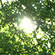 Green Leaves And Sun - VideoHive Item for Sale